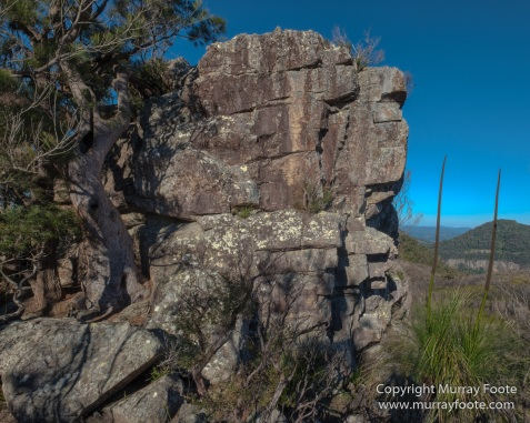 Australia, Binna Burra, Bruny Island, Bushwalking, Lamington National Park, Landscape, Nature, Photography, Queensland, Tasmania, Travel, Wildlife