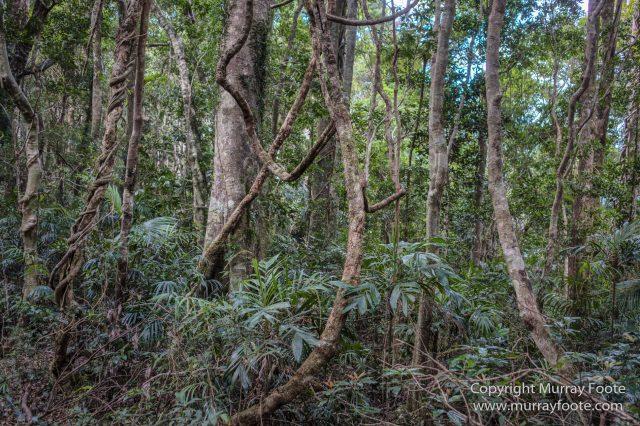Australia, Binna Burra, Bush Turkey, Bushwalking, Coomera Circuit, Lamington National Park, Landscape, Natural Bridge, Nature, Photography, Queensland, Travel, Wildlife