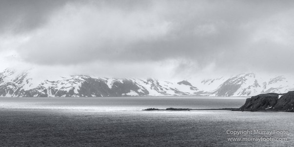 Albatross, Antarctic Tern, Black and White, Elephant seals, Fur seal, King Penguins, Landscape, Monochrome, Nature, Photography, seascape, South Georgia, Travel, Wilderness, Wildlife
