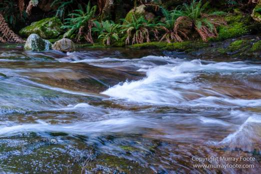 Australia, Landscape, Liffey Falls, Nature, Photography, Tasmania, Travel, Waterfall, Wilderness
