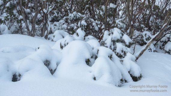 Australia, Barn Bluff, Bennett's Wallaby, Cradle Mountain, Crater Lake, Landscape, Nature, Overland Track, Photography, Tasmania, Travel, Waterfall, Wilderness, Wildlife
