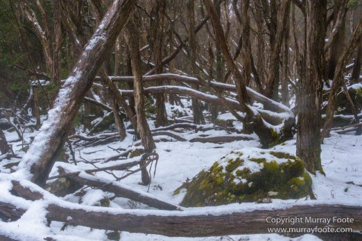 Australia, Barn Bluff, Landscape, Nature, Overland Track, Photography, Pine Forest Moor, Tasmania, Travel, Wilderness