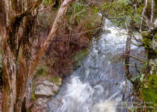 Australia, Landscape, Nature, Overland Track, Pelion Plains, Photography, Pine Forest Moor, Tasmania, Travel, Waterfall, Wilderness