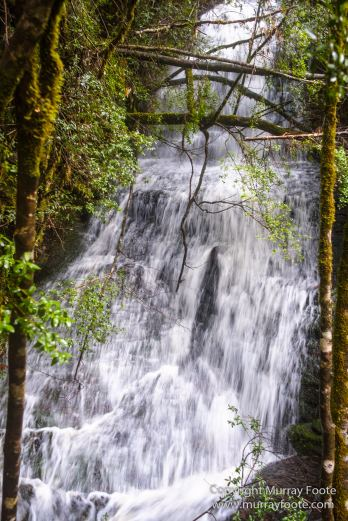 Australia, Landscape, Nature, Overland Track, Pelion Plains, Photography, Pine Forest Moor, Tasmania, Travel, Waterfall, Wilderness
