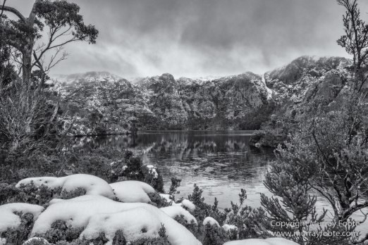 Australia, Black and White, Landscape, Monochrome, Nature, Overland Track, Photography, Tasmania, Travel, Wilderness