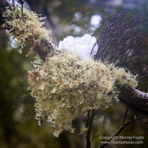 Australia, Barn Bluff, Landscape, Nature, Overland Track, Photography, Pine Forest Moor, Tasmania, Travel, Wilderness