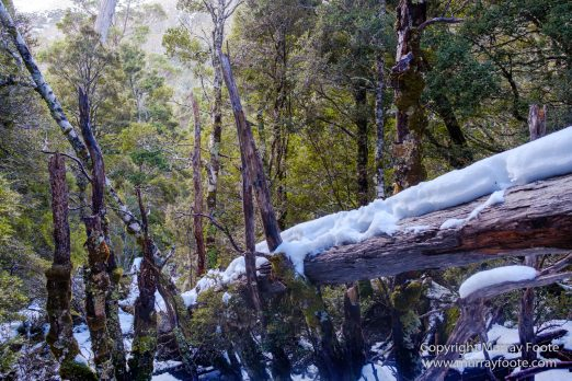 Australia, Landscape, Nature, Overland Track, Pelion Plains, Photography, Tasmania, Travel, Waterfall, Wilderness