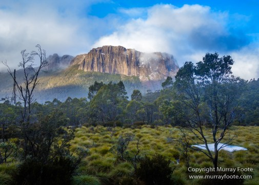 Australia, Cathedral Mountain, Landscape, Macro, Nature, Overland Track, Pelion Hut, Photography, Tasmania, Travel, Waterfall, Wilderness