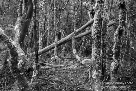 Australia, Black and White, Landscape, Macro, Monochrome, Nature, Overland Track, Photography, Tasmania, Travel, Wilderness