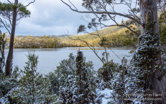 Australia, Lake Dobson, Landscape, Mt Field NP, Nature, Pandani, Photography, Tasmania, Travel, Wilderness