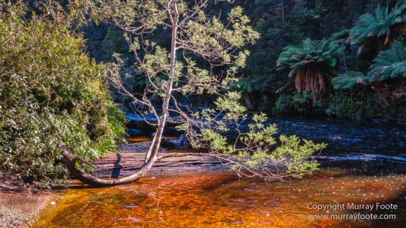 Australia, Creepy-Crawley Trail, Eucalyptus Regnans, Landscape, Nature, Photography, Tasmania, The Styx Valley, Travel, Wilderness