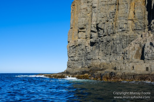 Australia, Bruny Island, Fur seal, Landscape, Nature, Photography, seascape, Tasmania, Travel, Wilderness, Wildlife
