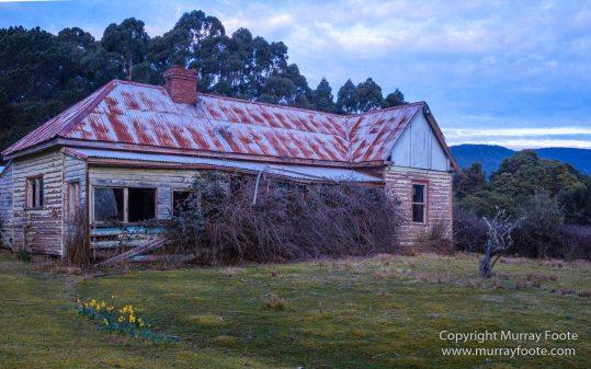 Architecture, Australia, Bennett's Wallaby, Bruny Island, Landscape, Nature, Photography, seascape, Tasmania, Travel, Wildlife