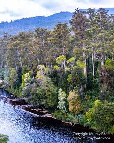 Australia, Landscape, Nature, Photography, Tahune Air Walk, Tasmania, Travel, Wilderness