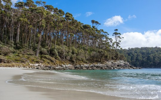 Australia, Canoe Bay, Fortescue Bay, Landscape, Macro, Nature, Photography, seascape, Tasmania, Travel, Wilderness