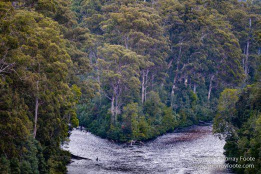 Australia, Landscape, Nature, Photography, Tahune Air Walk, Tasmania, Travel, Wilderness