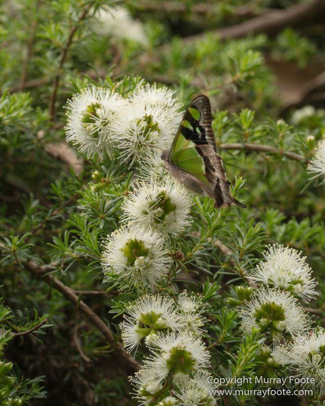 ANBG_Australia, Australian National Botanic Gardens, Canberra, Flowers, Focus stacking, Landscape, Macro, Nature, Photography, Travel