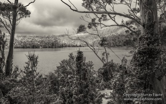 Australia, Black and White, Bruny Island, Landscape, Monochrome, Mount Field National Park, Nature, Photography, Tasmania, The Styx Valley, Travel, Wilderness