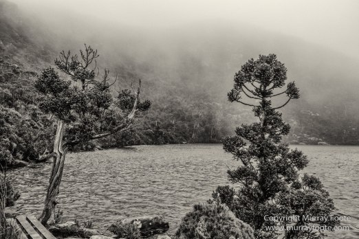 Australia, Black and White, Bruny Island, Hobart, Landscape, Monochrome, Mount Hartz National Park, Nature, Photography, Tahune Air Walk, Tasmania, Travel, Wilderness