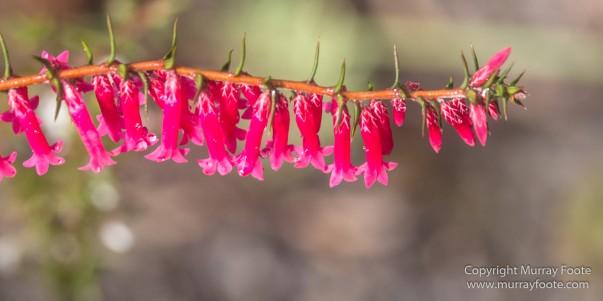 Australia, Freycinet Peninsula, Nature, Photography, seascape, Tasmania, Travel, Wilderness, Wineglass Bay Sail Walk