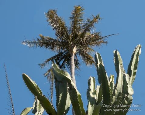 Art, Australia, Geelong, Geelong Botanic Gardens, Landscape, Nature, Photography, Travel