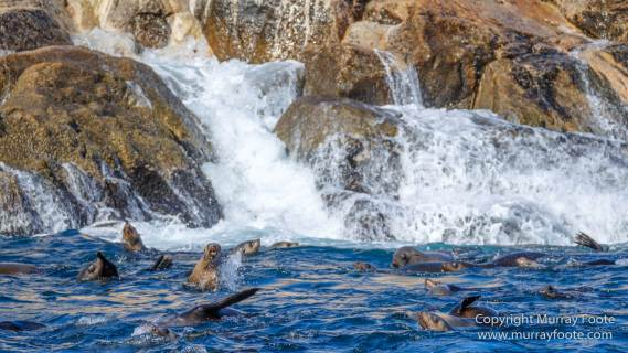 Australia, Fur seal, Ile des Phoques, Ketch, Maria Island, Nature, Photography, Sailing, Schouten Island, seascape, Tasmania, Travel, Wilderness, Wineglass Bay Sail Walk, Yachts