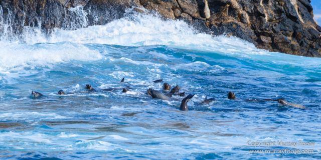 Australia, Fur seal, Ile des Phoques, Ketch, Maria Island, Nature, Photography, Sailing, Schouten Island, seascape, Tasmania, Travel, Wilderness, Wineglass Bay Sail Walk, Yachts