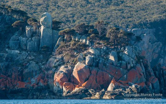 Australia, Freycinet Peninsula, Fur seal, Ketch, Little Tern, Nature, Photography, Sailing, seascape, Tasmania, Travel, Wilderness, Wineglass Bay, Wineglass Bay Sail Walk, Yachts