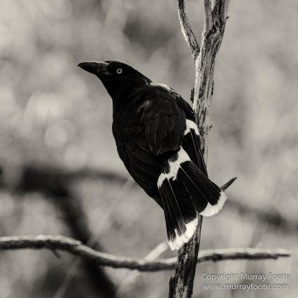 Architecture, Australia, Black and White, Canberra, Landscape, Macro, Monochrome, Nature, Photography, Travel, Wildlife
