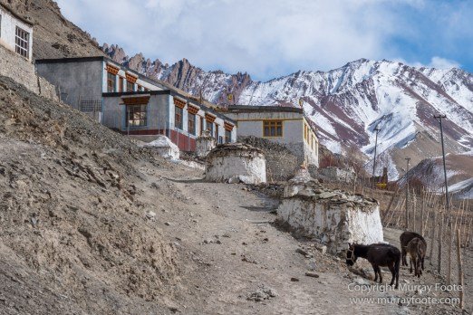 Buddhism, Hemis National Park, Horses, India, Ladakh, Landscape, Nature, Photography, Rumbak, Tibet, Travel, Wilderness
