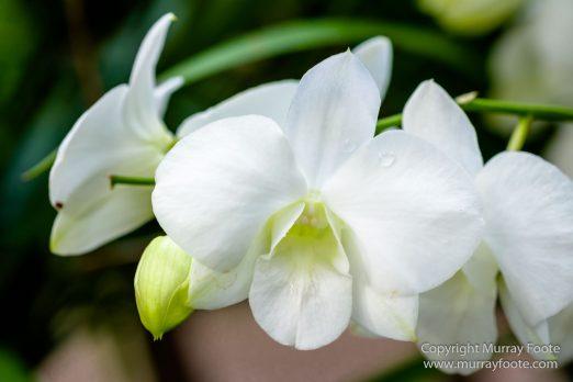 Flowers, Landscape, Macro, National Orchid Garden, Nature, Orchids, Photography, Singapore, Singapore Botanic Gardens, Travel