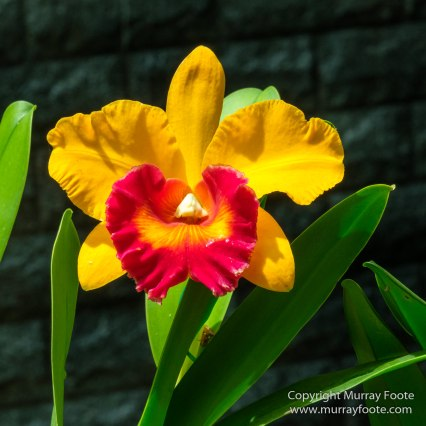 Asian Civilisations Museum, Cloud Forest, Flowers, Gardens by the Bay, Landscape, Macro, Nature, Orchids, Photography, Singapore, Travel