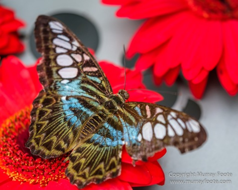 Bhudda Tooth Temple, Butterfly, Chinatown, Landscape, Macro, Nature, Photography, Singapore, Street photography, Travel