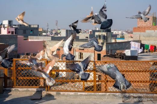 Delhi, Fatehpuri Masjid, Humayun's Tomb, India, Landscape, Photography, Street photography, Travel