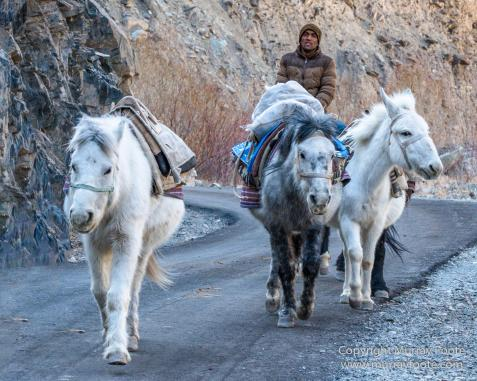 Buddhism, Hemis National Park, Horses, India, Ladakh, Landscape, Nature, Photography, Tibet, Travel, Wilderness