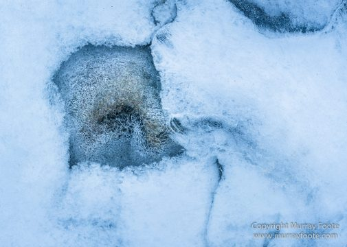 Abstract, Hemis National Park, Ice, India, Ladakh, Landscape, Macro, Nature, Photography, Rumbak, Snow Leopards, Tibet, Travel, Wilderness