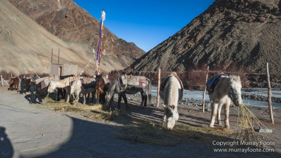 Hemis National Park, Horses, India, Ladakh, Landscape, Nature, Photography, Rumbak, Tibet, Travel, Wilderness