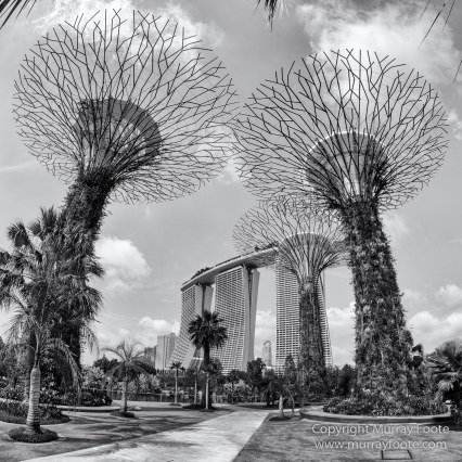 Black and White, Gardens by the Bay, Landscape, Monochrome, Nature, Photography, Singapore, Wilderness