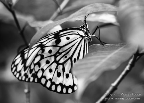 Black and White, Buddhism, Butterfly, Chinatown, Landscape, Monochrome, Nature, Photography, Singapore, Wilderness
