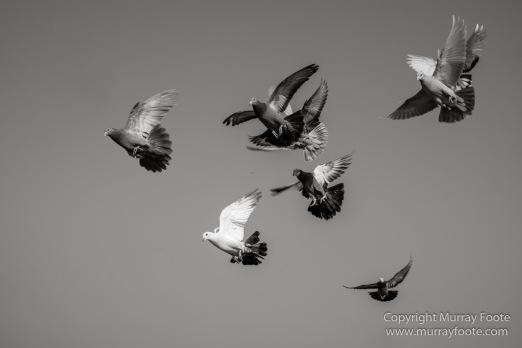 Black and White, Delhi, India, Landscape, Monochrome, Photography, Street photography