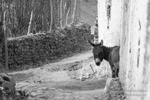 Black and White, Blue Sheep, Buddhism, Hemis National Park, Horses, India, Ladakh, Landscape, Monochrome, Photography, Rumbak, Street photography, Tibet, Yak