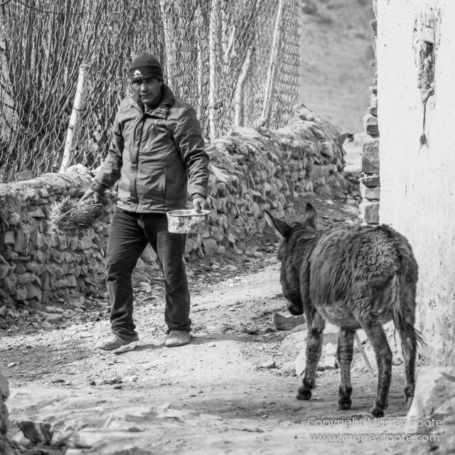 Black and White, Blue Sheep, Buddhism, Hemis National Park, Horses, India, Ladakh, Landscape, Monochrome, Photography, Rumbak, Street photography, Tibet, Yak