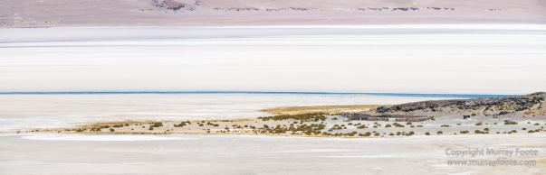 Andean Goose, Atacama Desert, Black-hooded sierra-finch, Chile, Chilean Flamingo, Landscape, Nature, Panorama, Photography, Sala de Tara, Travel, vicuña, Volcan Lascar, Wilderness, Wildlife