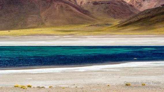 Atacama Desert, Chile, Landscape, Nature, Panorama, Photography, Salar de Aguas Calientes, Salar Miñiques, Salar Miscanti, Travel, vicuña, Wilderness, Wildlife