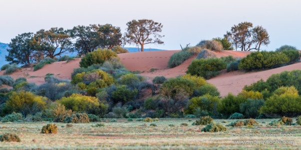 Architecture, Australia, Cazneau Tree, Flinders Ranges, Central Bearded dragon, Landscape, Macro, Merna Mora Station, Nature, Photography, South Australia, Travel, Wilderness, Wildlife, Yellow-footed rock-wallaby