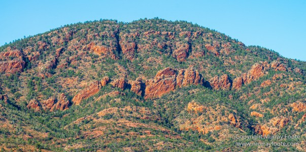 Architecture, Australia, Cazneau Tree, Flinders Ranges, Central Bearded dragond, Landscape, Macro, Merna Mora Station, Nature, Photography, South Australia, Travel, Wilderness, Wildlife, Yellow-footed rock-wallaby