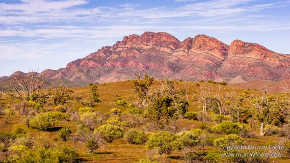 Architecture, Australia, Flinders Ranges, Landscape, Macro, Merna Mora Station, Moralana Track, Nature, Nilpena Station, Photography, South Australia, Tawny frogmouth, Travel, Wilderness, Wildlife