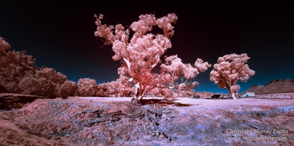 Architecture, Australia, Brachina Gorge, Cazneau Tree, Flinders Ranges, Infrared, Landscape, Merna Mora Station, Nature, Photography, South Australia, Travel, Wildlife