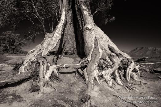 Architecture, Australia, Black and White, Flinders Ranges, Landscape, Monochrome, Nature, Photography, South Australia, Travel, Wilderness, Wildlife