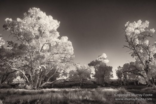 Architecture, Australia, Black and White, Flinders Ranges, Infrared, Landscape, Monochrome, Nature, Photography, South Australia, Travel, Wilderness, Wildlife